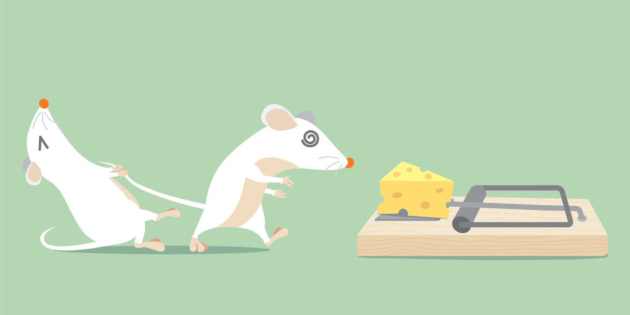 The Content Creator Wars: How to Win in a Game of Mousetrap